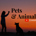 Top YouTube Channels For Pet And Animal Lovers