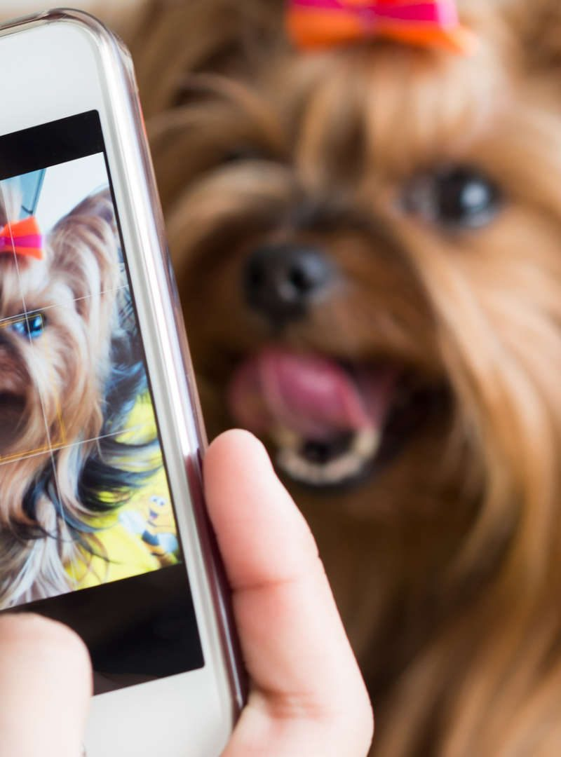 10 Best Animal Accounts on Instagram You Should Follow
