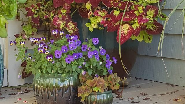 Top 10 best gardening YouTube channels for Plant enthusiasts